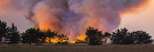 Wildfire burning through a forest: info about preventing damage and staying safe